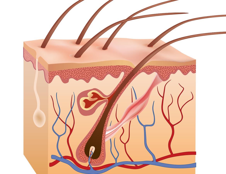 medea medicina estetica capelli trapianto